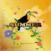 image of toucan  - Summer - JPG