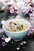 stock photo of quail egg  - Quail easter eggs in abowl  and spring cherry blossoms on wooden table - JPG