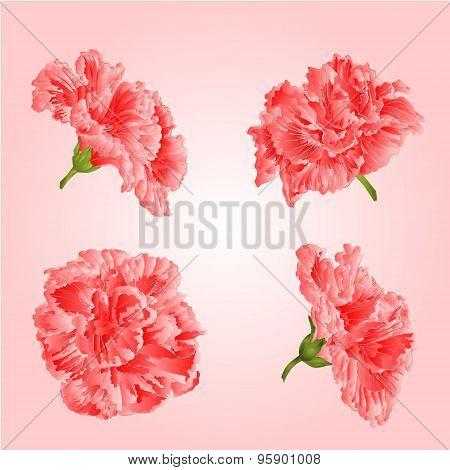 Pink Hibiscus Flowers Vector