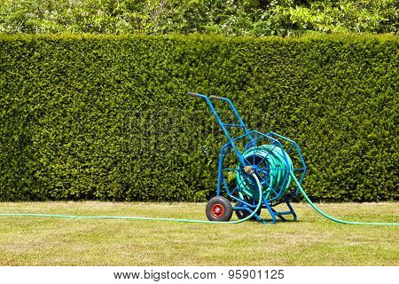 Big garden hosepipe on a lawn against green trimmed hedge