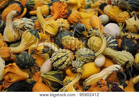 Lots of Autumn Gourds
