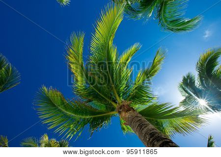 Palm tree on the sky