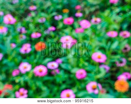 Blurred Of Flowers