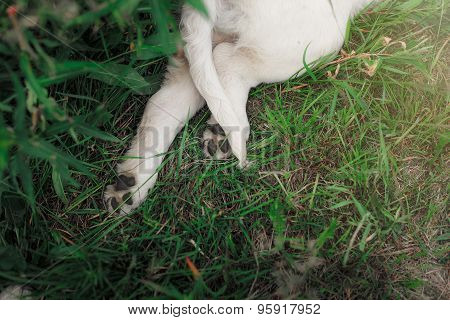 Cute Puppy Foot