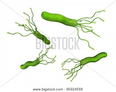 medical bacteria illustration of the helicobacter pyloris
