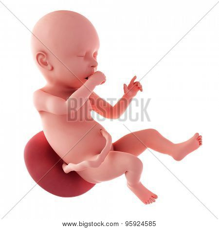 medical accurate illustration of a fetus - week 40