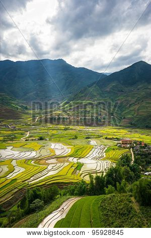 Rice fields on terraced in rainny seasont at TU LE Village, Yen Bai, Vietnam.