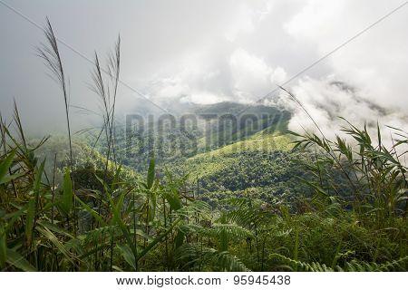 mist over the mountain Phusoidao National Park ,Thailand.