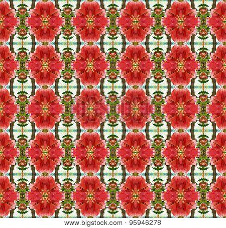 Orange Bougainvillea Flowers Bloom In Summer Seamless