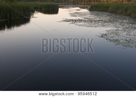 marshlands with reeds at dusk