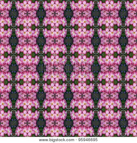 Wonderful Of  Pink Adenium Flowers Seamless