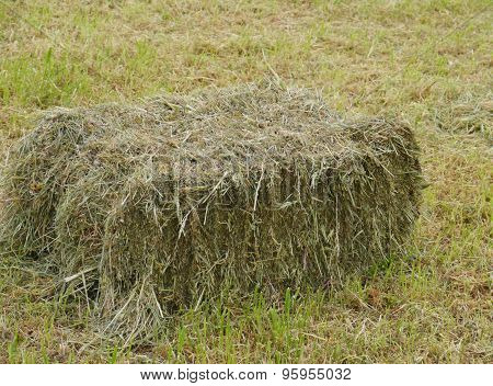 Hay bale in a meadow in spring