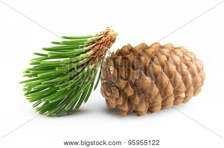 Pine tree branch and cone isolated on white.