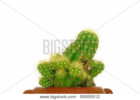Cactus Side View Isolate On White Background