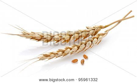 Wheat in closeup