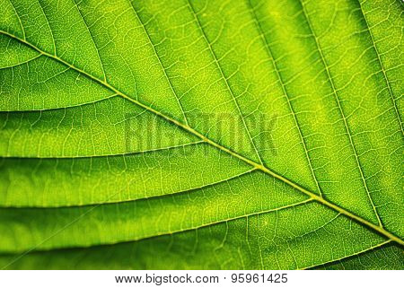 Macro of leaf. Element of design. Shallow depth-of-field.