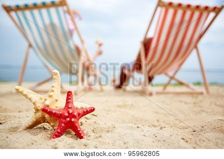 Two sea stars on sand and relaxing sunbathers on background