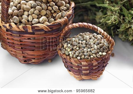 Two Kinds Of Hemp Seeds