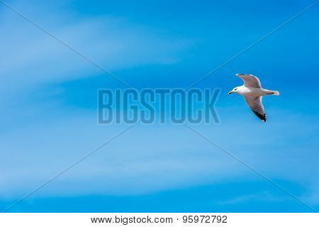 White Seagull On Bright Blue Sky Background
