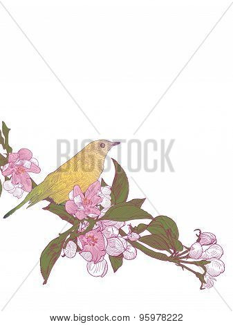 Twigs Blooming Apple Tree And Sitting Bird On White Background.