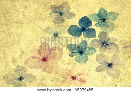 Hydrangea petals with grunge texture overlay