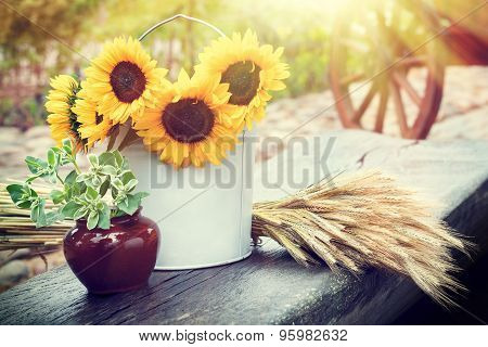 Sunflowers In Bucket, Ears Of Wheat And Pot With Plant On Table. Rustic Still Life.