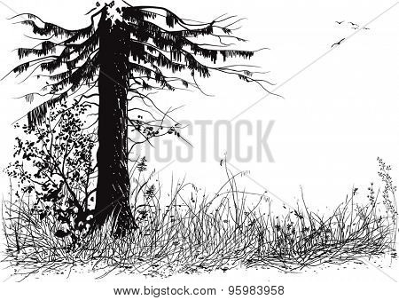 Silhouette of pine tree and grass