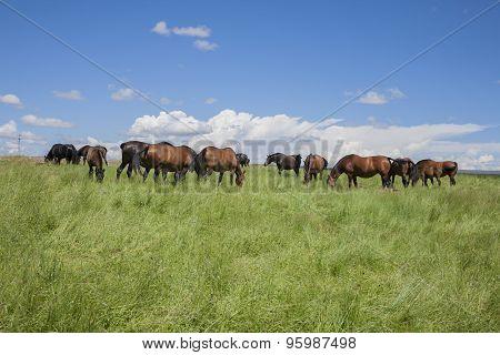 Horses Livestock