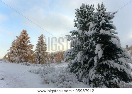 Landscape After Snowfall