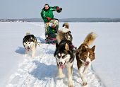 picture of sled dog  - man in dog sledding travel across snow field - JPG