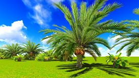 stock photo of oasis  - African oasis - JPG