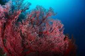 foto of bottomless  - Corals in a tropical sea - JPG