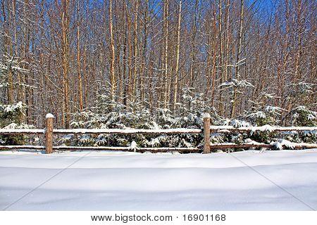 fence near wood