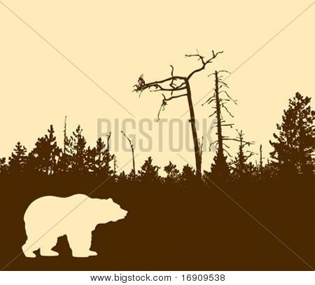 vector silhouette bear