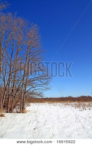 greater oaks on winter field
