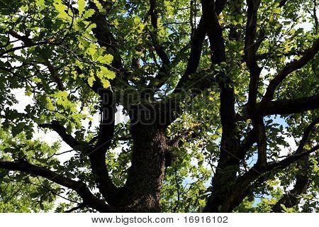 roblón en madera de verano