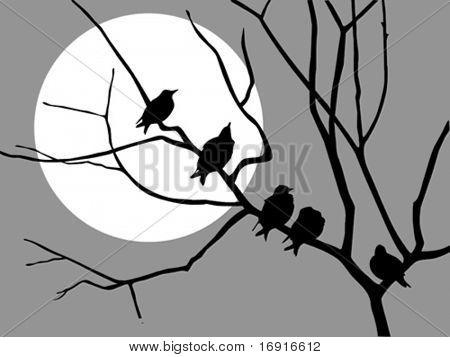 vector  illustration migrating starling on branch tree