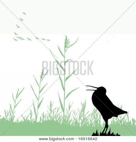 vector  silhouette of the snipe