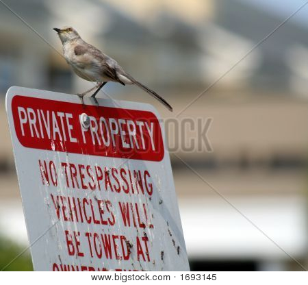 No Trespassing?