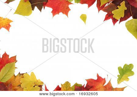colorful autumn leaves isolated on white