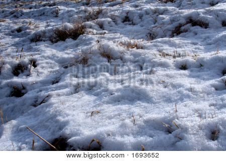 Snow Covered Ground