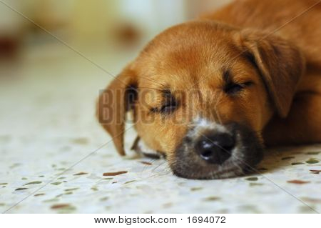 Cute Puppy Sleeping.