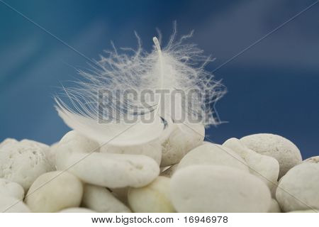 Close-up of a white feather on white beach pebbles