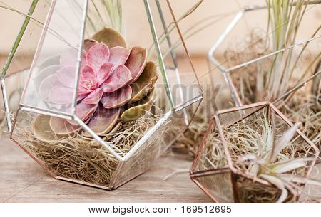 succulent garden in glass terrarium