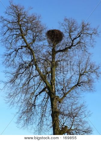 Stork Nest In A Bare Tree