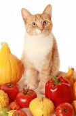 red fluffy cat with fresh vegetables poster
