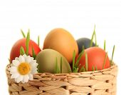 picture of easter flowers  - bright easter eggs on white - JPG