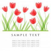 Постер, плакат: Тюльпан цветы Дизайн для поздравительной открытки