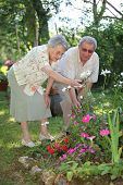 stock photo of old couple  - elderly couple in garden - JPG