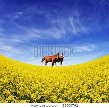 Two beautiful horses grazing in a field